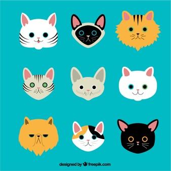 Cat Vectors, Photos and PSD files.