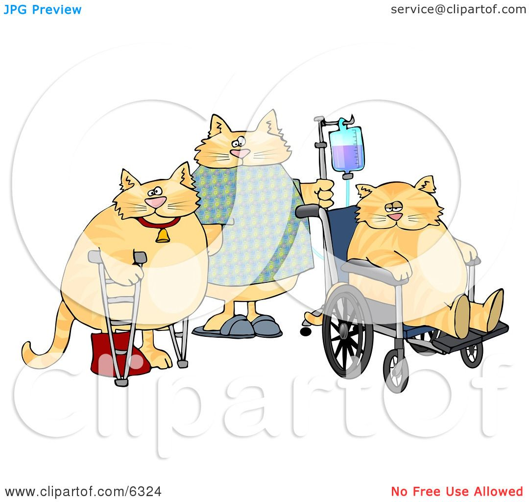 Three Orange Cats With IV Dispensers, Crutches, Casts and.