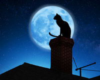 Cat Sitting Roof Stock Photos, Images, & Pictures.