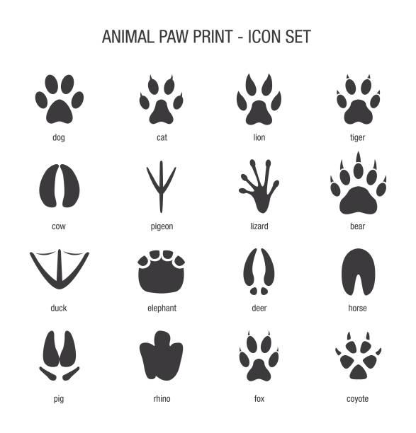 Best Cat Paw Print Illustrations, Royalty.