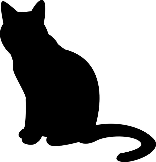 1000+ ideas about Katzenbilder Kostenlos on Pinterest.