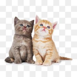 Cat Png & Transparent Images #24.