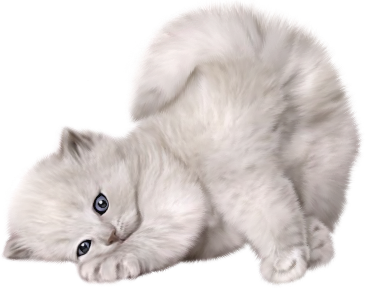Large PNG Cute Cat Picture.