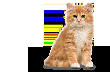 Cat PNG Transparent Free Images.