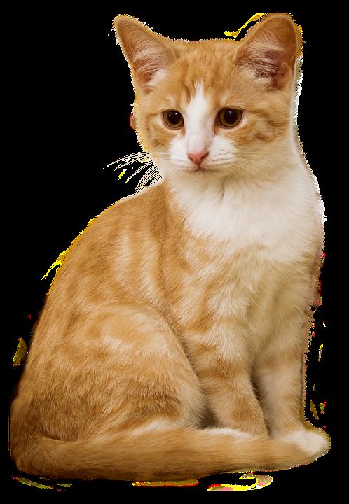 Cat Kitten Sit.