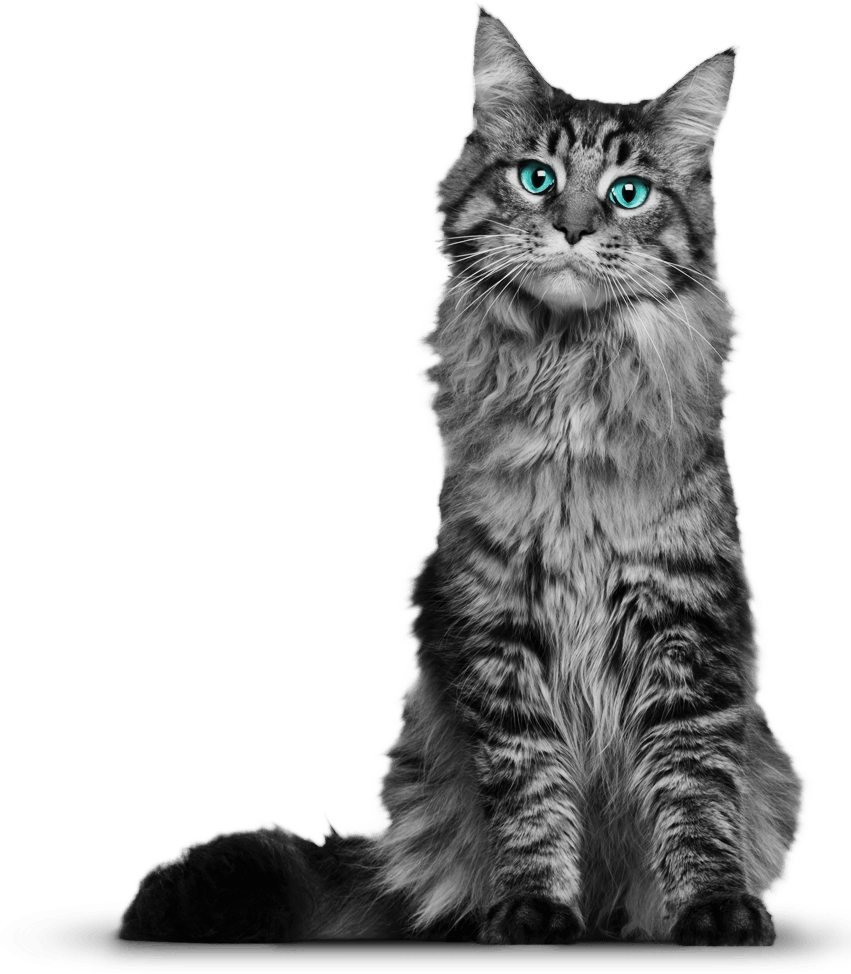 Cats png free images, download.