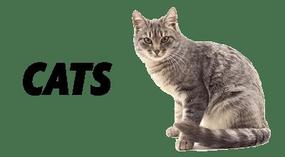 Natural Dog and Cat Food, Treats, Toys.
