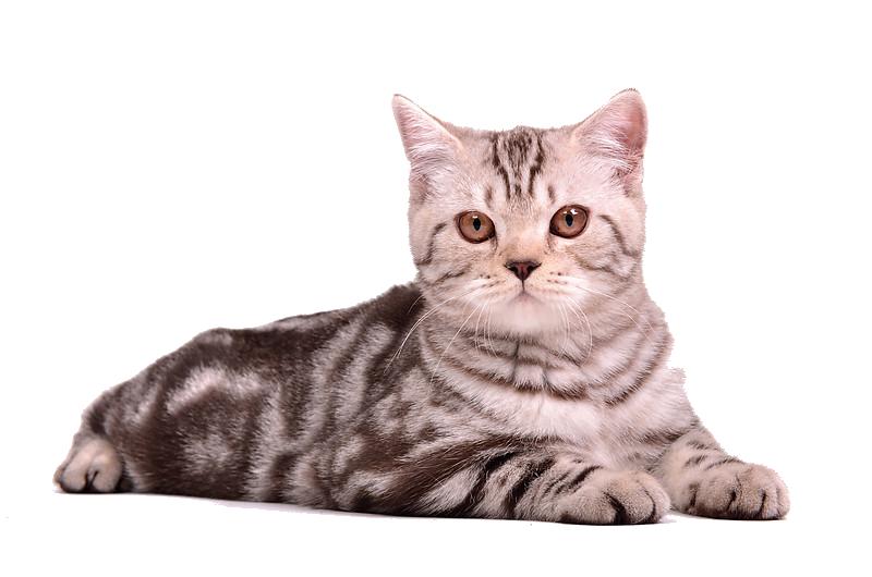 Download Cat PNG 13.