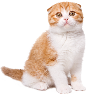 Download Free png silly kitty clipart 5424 Grumpy Cat Upset.
