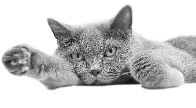 Cat Png Png & Free Cat.png Transparent Images #15672.