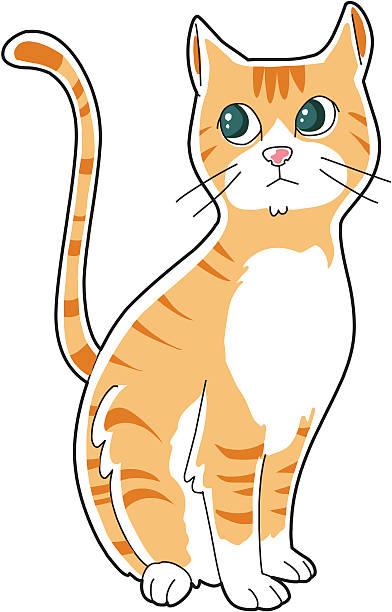 Best Orange Tabby Cat Illustrations, Royalty.