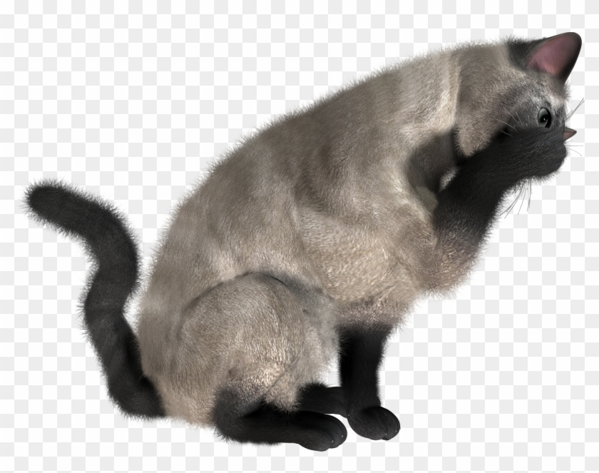 Cats Png In High Resolution.