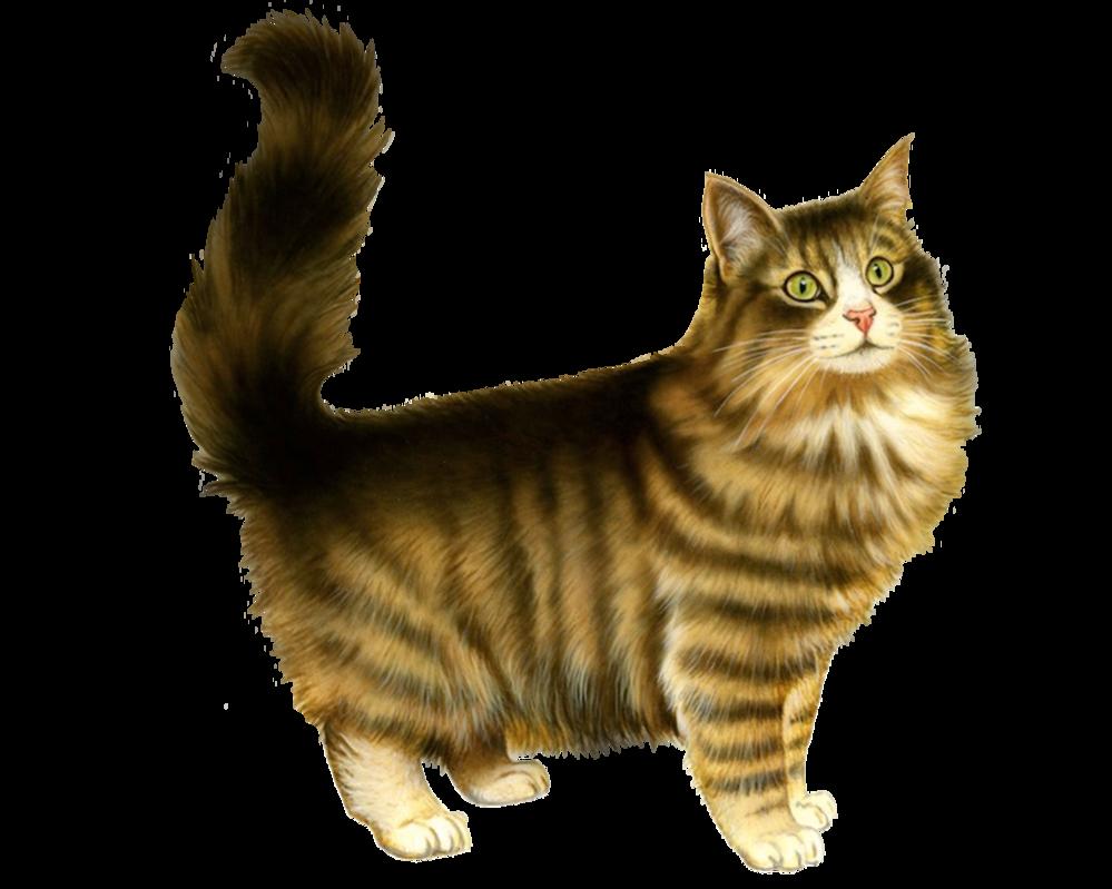 Download Cat PNG 5.