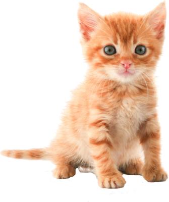 Cat PNG images.