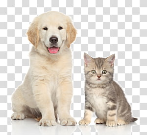 Adult St. Bernard, Dog Puppy Pet Cat, dog transparent background PNG.