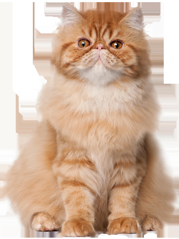 Sitting Cat PNG Clip Art.
