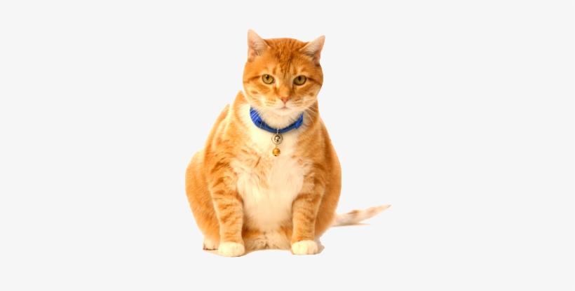 Fat Cat Png.