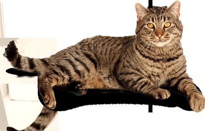 Wild cat PNG Images.