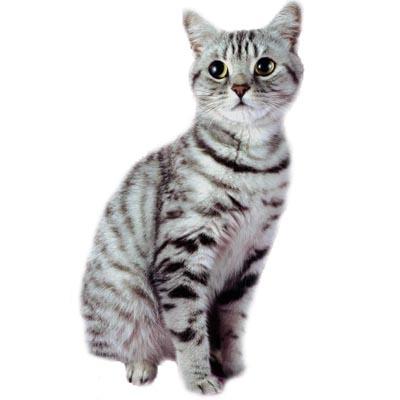 Cat 5.