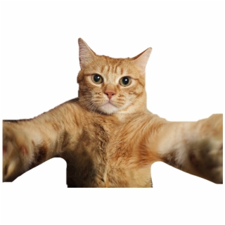 Free Cat PNG Images & Cliparts.