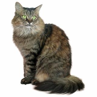 Free Cat PNG Image, Transparent Cat Png Download.
