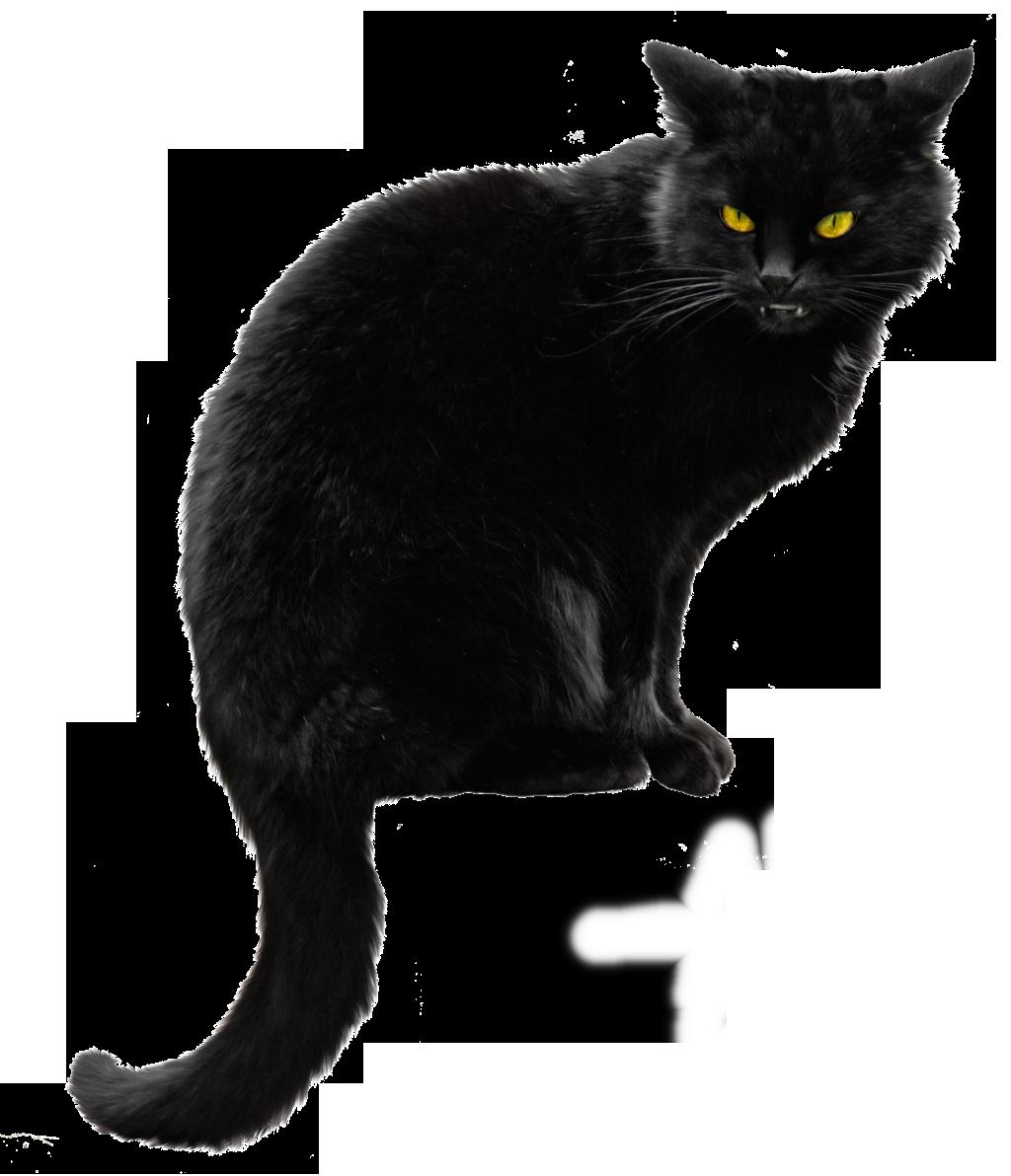 Cat PNG Images Transparent Free Download.
