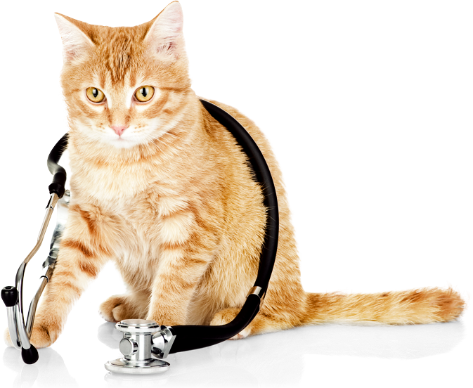 Cat Transparent Background PNG.