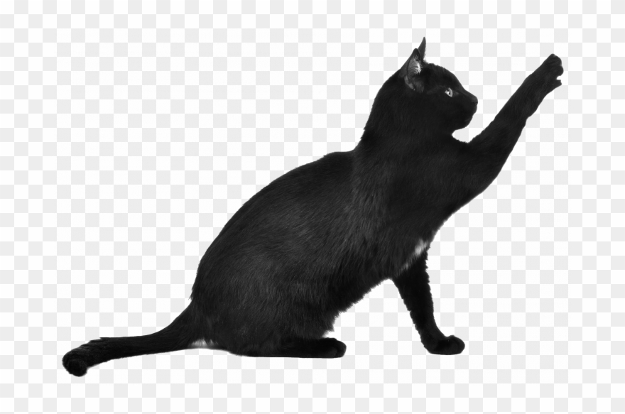 Permalink To 99 Awesome Black Cat Png Ideas.