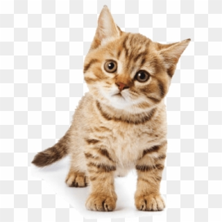 Cat PNG Transparent For Free Download.