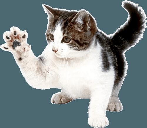 Cat PNG Transparent Cat.PNG Images..