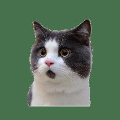 Cats transparent PNG images.