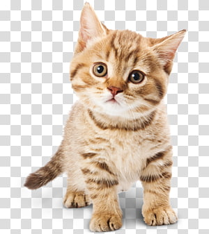 Cat PNG clipart images free download.