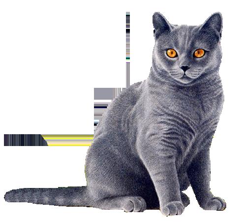 HQ Cat PNG Transparent Cat.PNG Images..