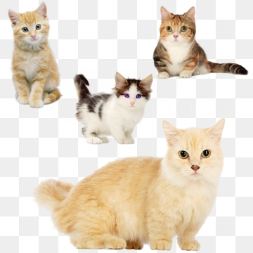 Cat PNG Images, Download 12,359 Cat PNG Resources with Transparent.