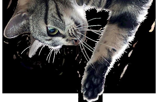 Cat PNG Transparent Image.