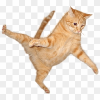 Jumping Cat PNG Images, Free Transparent Image Download.