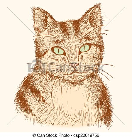 Clipart Vector of Portrait of hand drawn tabby cat..