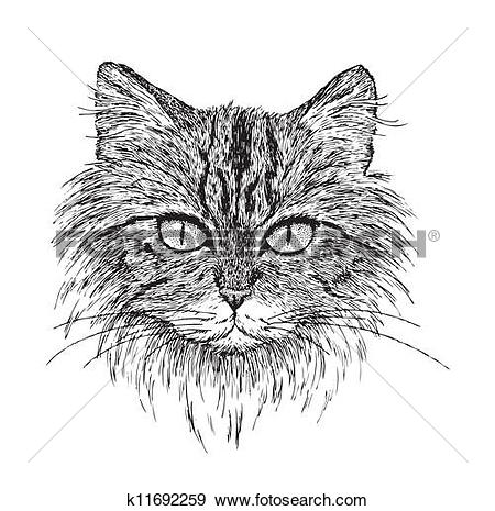 Clip Art of Tabby Cat Portrait k11692259.