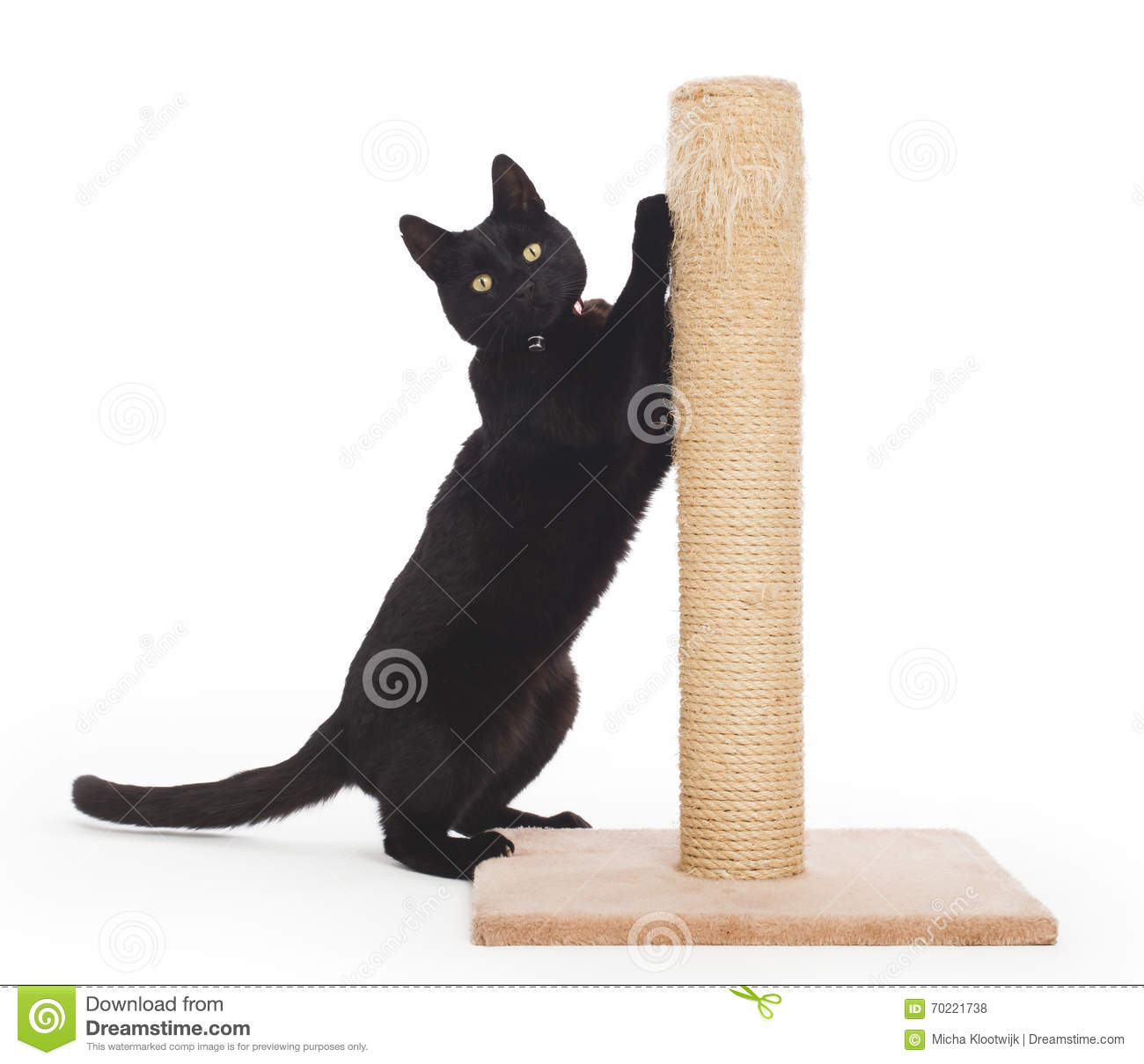 Black Cat With A Scratching Post Stock Photo.
