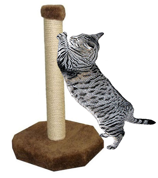 Free Cat Scratching Post