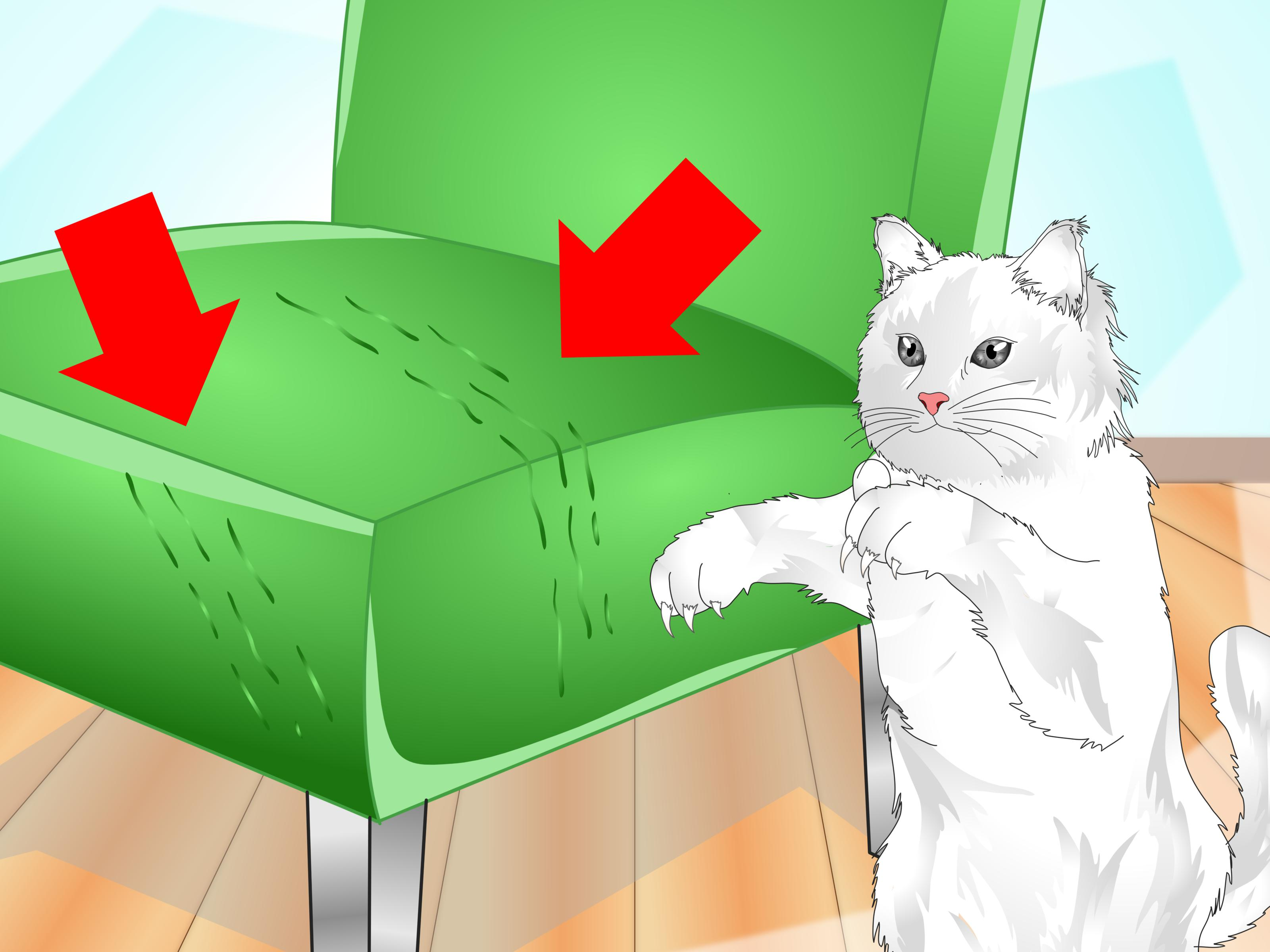How to Clean a Cat Scratching Post: 9 Steps (with Pictures).