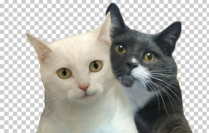 Cat Selfies Desktop Felidae PNG, Clipart, Aegean Cat.
