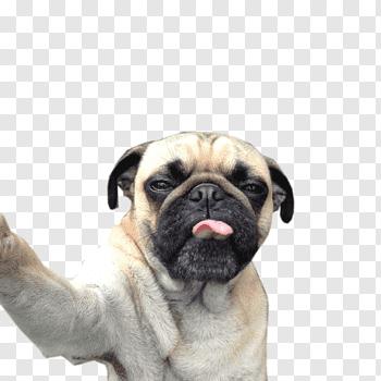 Cat Selfies cutout PNG & clipart images.