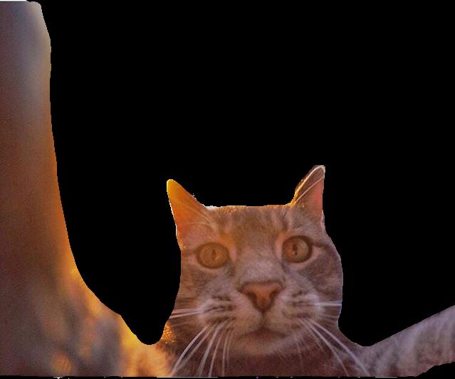 cat cats selfie selfies animal animals cute freetoedit.
