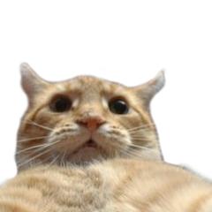 Cat Taking A Selfie on Twitter: