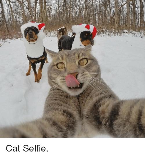 p>Cat Selfie<p>.