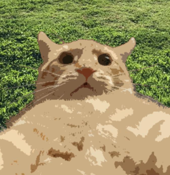 Cat Selfie Snapchat Lens & Filter.