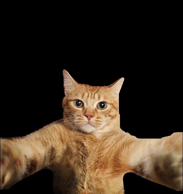 cat selfiecat selfie cats meow kitty pet pets animal.