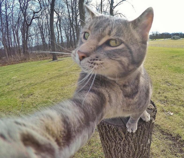 This Selfie.