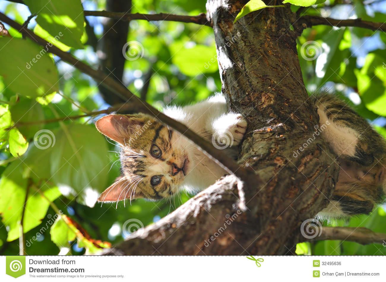 Stray Cat Stuck On The Tree Royalty Free Stock Image.